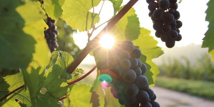 grapes 984493 1280